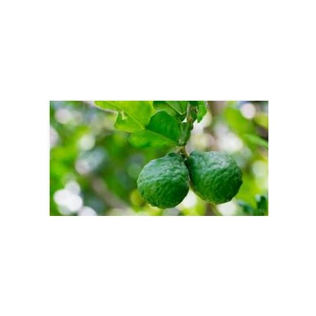 Aceite esencial Bergamota puro 100%