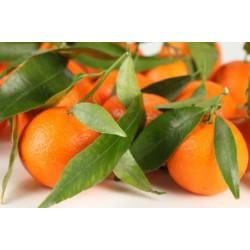 Aceite esencial Mandarina puro 100%